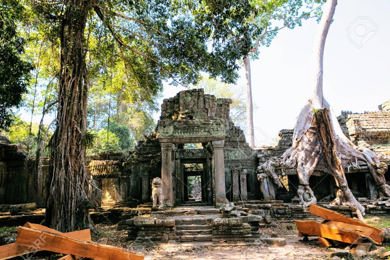 Ta Prohm Temple, Cambodia.
